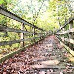 Autumn Passageway - 2015 - 1st place -MaryLin Howard